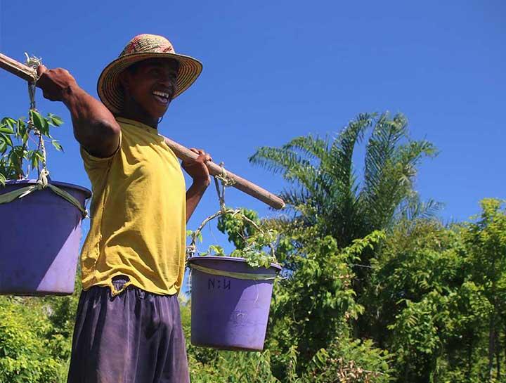 Woodchuck Planting At Madagascar