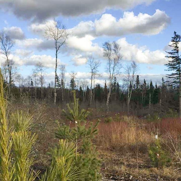 Cushing Planting Site