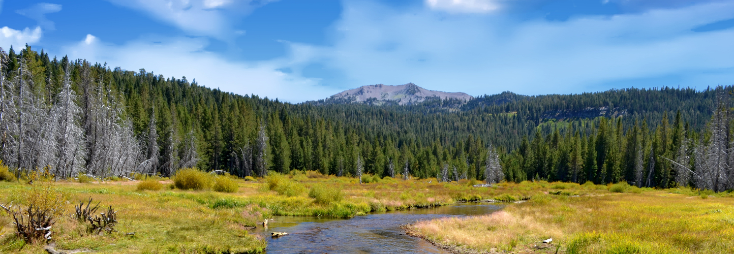 Hat Creek Planting Site